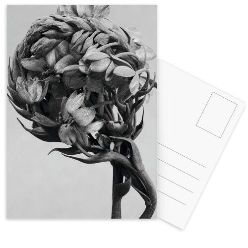 """JUNIQE Postkarten Blätter & Pflanzen """"Staub - Milchstern"""" von JUNIQE - Karten Kunst"""