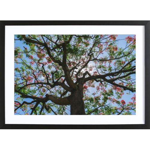 """JUNIQE Bild Bäume """"Flammenbaum"""" von JUNIQE - Künstler: Tan Kadam"""