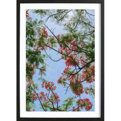 """JUNIQE Bild Bäume """"Flammenbaum-Äste"""" von JUNIQE - Künstler: Tan Kadam"""