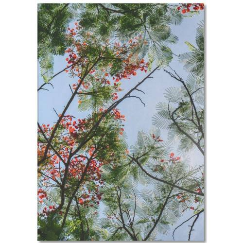 """JUNIQE Notizblock Bäume """"Flammenbaum-Äste"""" von JUNIQE"""