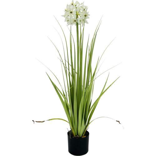 I.GE.A. Kunstblume Allium, , Höhe 68 cm, im Topf, weiß