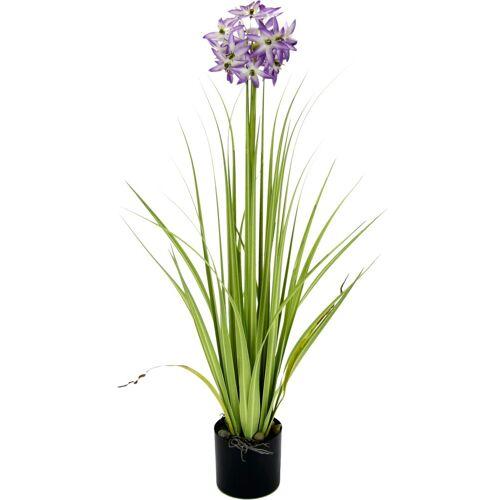 I.GE.A. Kunstblume Allium, , Höhe 68 cm, im Topf, violett