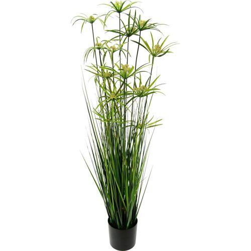 I.GE.A. Kunstpflanze »Zyperngras im Topf«, , Höhe 150 cm