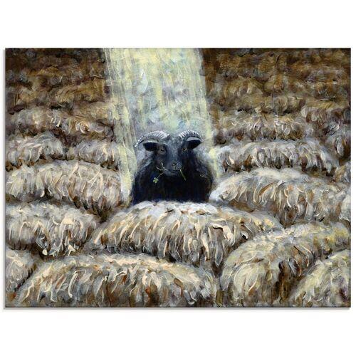 Artland Glasbild »Schwarzes Schaf«, Haustiere (1 Stück)