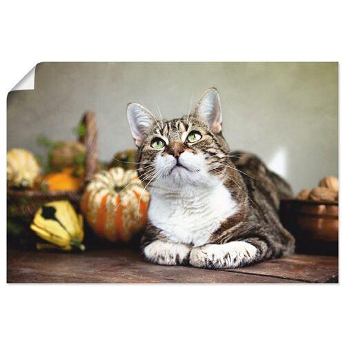 Artland Wandbild »Katze und Herbstdeko«, Haustiere (1 Stück)