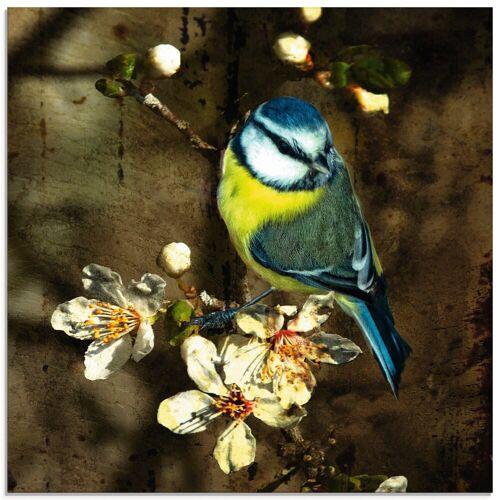 Artland Glasbild »Blaumeise auf Kirschzweig«, Vögel (1 Stück)