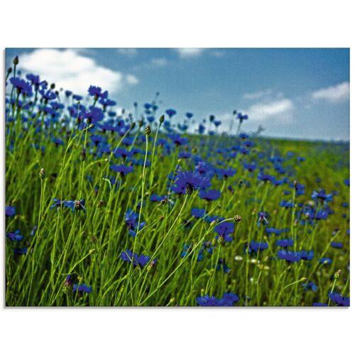 Artland Glasbild »Kornblumenwiese«, Blumenwiese (1 Stück)