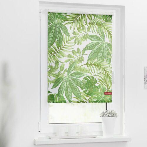 LICHTBLICK ORIGINAL Seitenzugrollo »Rollo Klemmfix, ohne Bohren, blickdicht, Blätter - Grün«, , blickdicht, freihängend