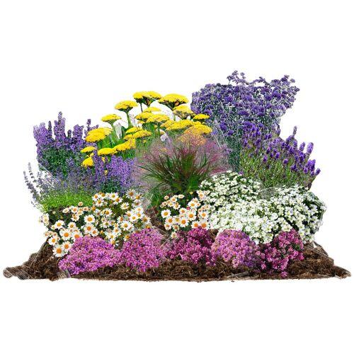 BCM Beetpflanze »Pflegeleicht« Set, 18 Pflanzen