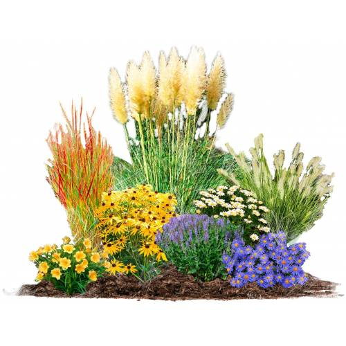 BCM Beetpflanze »Gräserbeet« Set, 8 Pflanzen