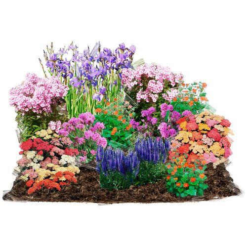 BCM Beetpflanze »Pastell-Traum« Set, 12 Pflanzen
