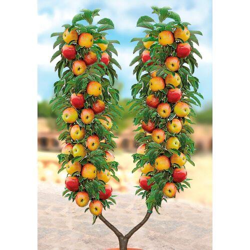 BCM Apfelbaum