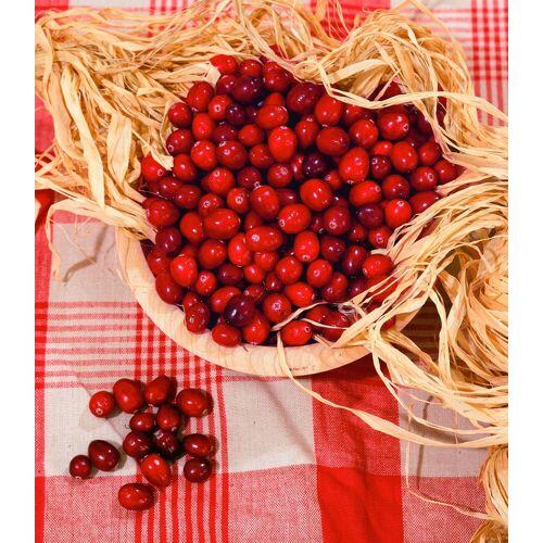 BCM Obstpflanze »Cranberry«