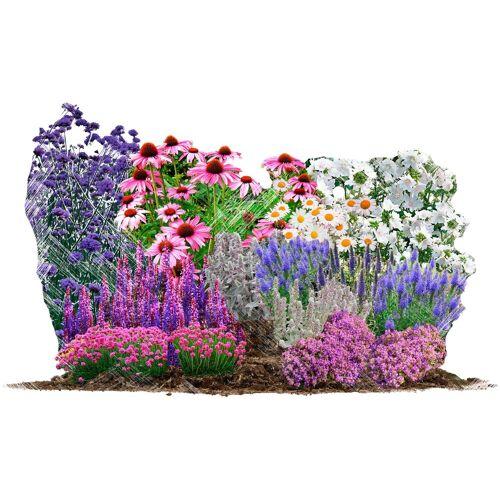 BCM Beetpflanze »Bienen-& Schmetterlingsgarten« Set, 18 Pflanzen