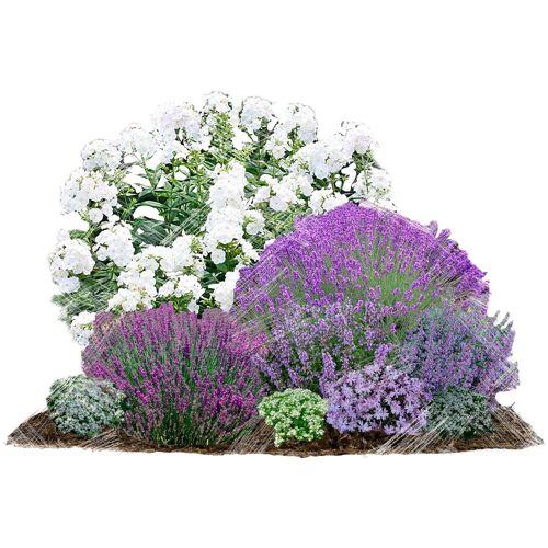 BCM Beetpflanze »Bienenfreundlich« Set, 9 Pflanzen