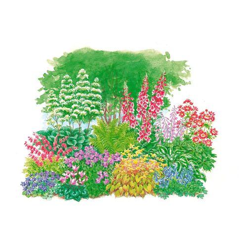 BCM Beetpflanze »Schattenpflanzen« Set, 11 Pflanzen