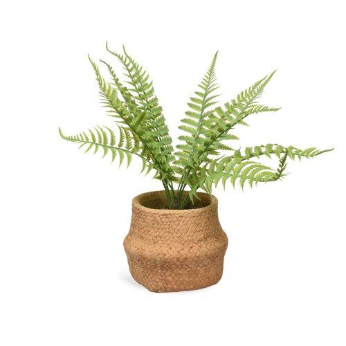 DEPOT Topfpflanze Farn ca.13x32cm, natur