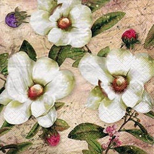 Linoows Papierserviette »20 Servietten, Drei Weiße Magnolien und Blütenknos«, Motiv Weiße Magnolien und Blütenknospen