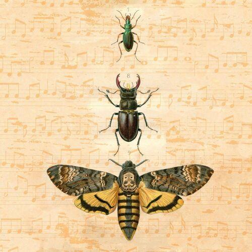 IHR Papierserviette »Insekten«, (5 St), 33 cm x 33 cm