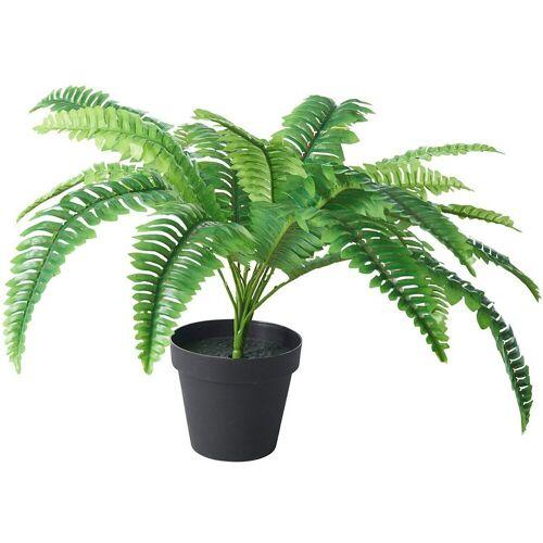 Tawo Kunstpflanze »Farn im Topf, H ca. 50cm«,