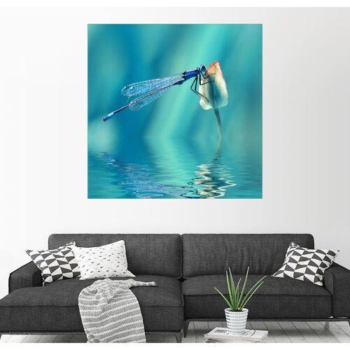 Posterlounge Wandbild, Libelle mit Spiegelung 20 cm x 20 cm;30 cm x 30 cm;40 cm x 40 cm;50 cm x 50 cm;60 cm x 60 cm;70 cm x 70 cm