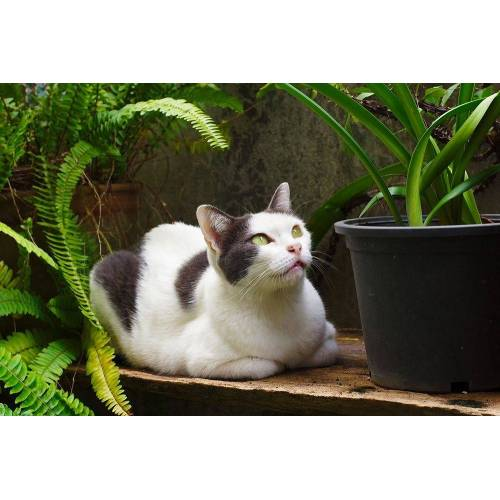 DesFoli Poster »Katze Cat Blumentopf P2365« 120 cm x 80 cm;150 cm x 100 cm;30 cm x 20 cm;40 cm x 30 cm;70 cm x 50 cm;91.5 cm x 61 cm