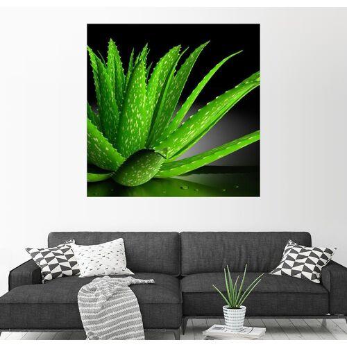 Posterlounge Wandbild, Aloe Vera 100 cm x 100 cm;13 cm x 13 cm;20 cm x 20 cm;30 cm x 30 cm;40 cm x 40 cm;50 cm x 50 cm;60 cm x 60 cm;70 cm x 70 cm