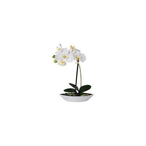 Gasper GmbH Phalaenopsis ca. 30cm weiß