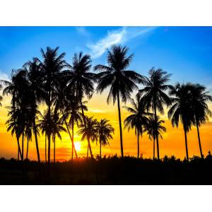 Papermoon Fototapete Coconut Palm Trees B/L: 2 m x 1,49 m, Bahnen: 4 St. bunt Fototapeten Tapeten Bauen Renovieren