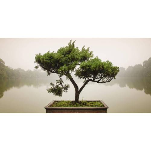 Home affaire Glasbild Panom: Chinesischer Bonsaibaum, 100/50 cm B/H: 100 x 50 grün Glasbilder Bilder Bilderrahmen Wohnaccessoires