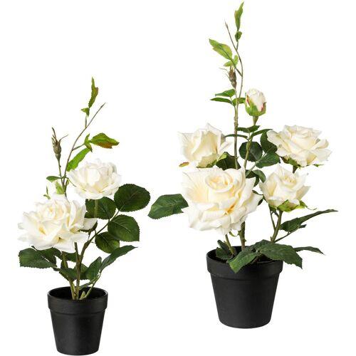 Creativ green Künstliche Zimmerpflanze, 2er Set H: 40 cm-48 cm weiß Zimmerpflanze Zimmerpflanzen Kunstpflanzen Wohnaccessoires