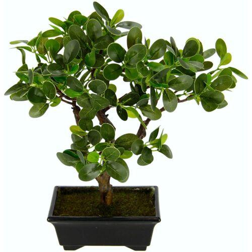 I.GE.A. Kunstbonsai Ginseng-Bonsai, in Bonsaischale aus Kunststoff B/H: 13 cm x 33 grün Künstliche Zimmerpflanzen Kunstpflanzen Wohnaccessoires
