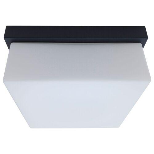 Bega 33032 LED Wand-/Deckenleuchte, silber