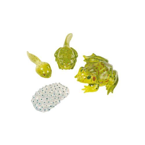 Insect Lore Lebenszyklus-Figuren: Frosch