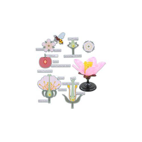 Betzold Set: Die Kirschblüte