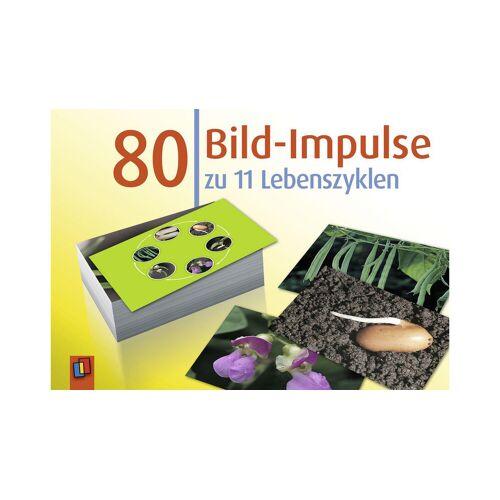 Verlag an der Ruhr Bildkarten: 80 Bild-Impulse zu 11 Lebenszyklen