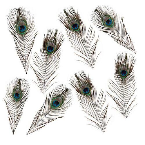Echte Pfauenaugen-Federn, 15–20 cm, 8 Stück