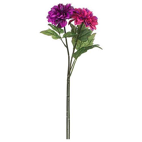 Dahlien, lila-pink, 65 cm, 2 Stück