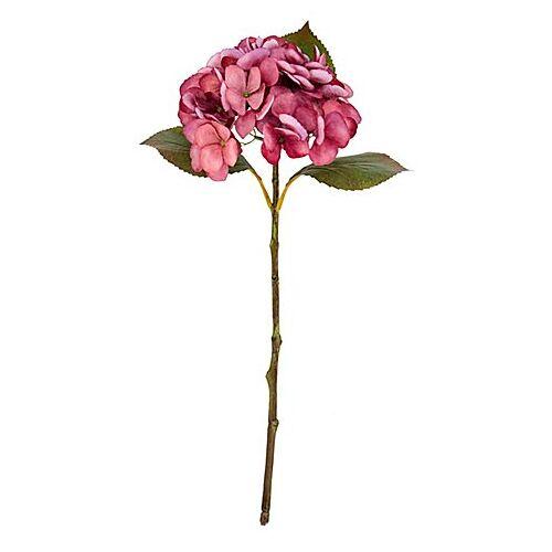 Hortensie, rose, 45 cm