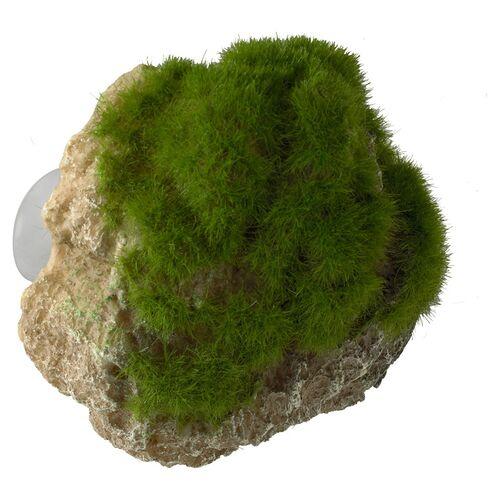 Aqua Della Aquariumdekoration Stein mit Moos und Saugnapf, Größe: S