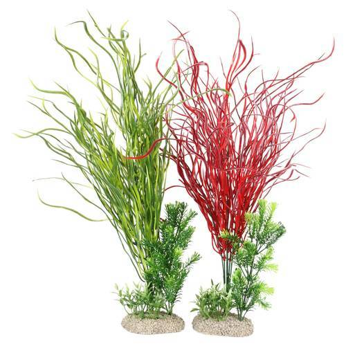 Aqua Della Aquariumpflanze Lily Gras