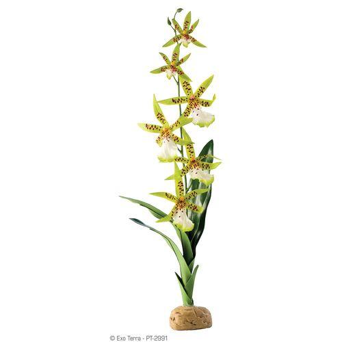 Exo Terra Terrarien-Pflanze Spinnen Orchidee