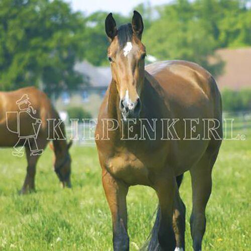 Kiepenkerl (8,73 EUR/kg) Kiepenkerl Country Horse 2120 Pferdeweide Balance 10 kg