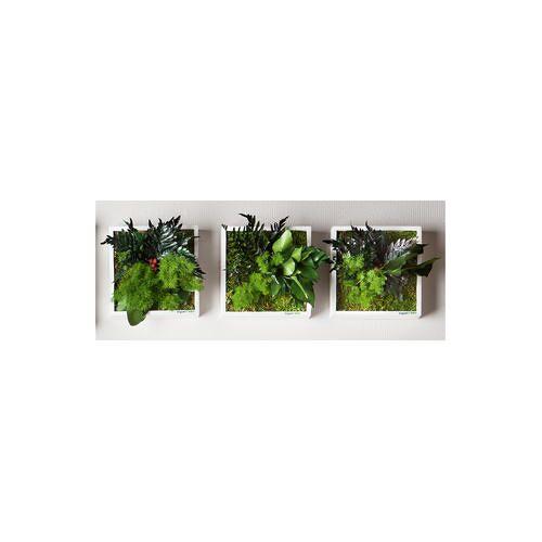 Stylegreen Pflanzenbild, Pflanzeninsel quadratisch, 22 x 22 cm
