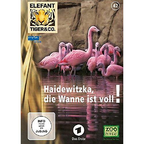 - Elefant, Tiger & Co. - Teil 42 - Haidewitzka, die Wanne ist voll [2 DVDs] - Preis vom 20.10.2020 04:55:35 h