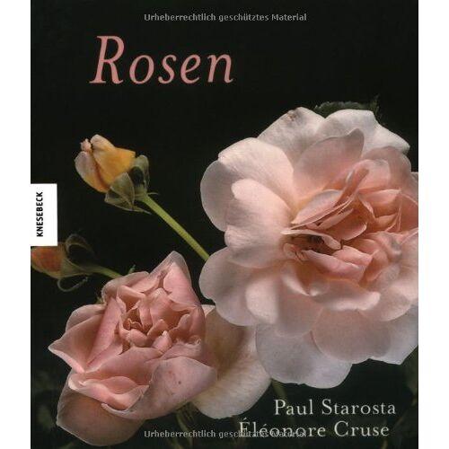 Paul Starosta - Rosen - Preis vom 14.06.2021 04:47:09 h