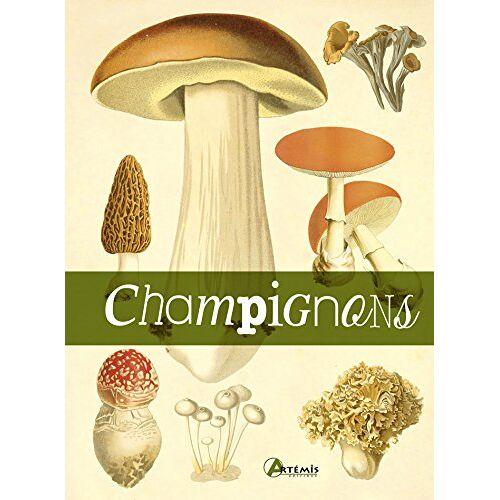 - Champignons - Preis vom 09.06.2021 04:47:15 h