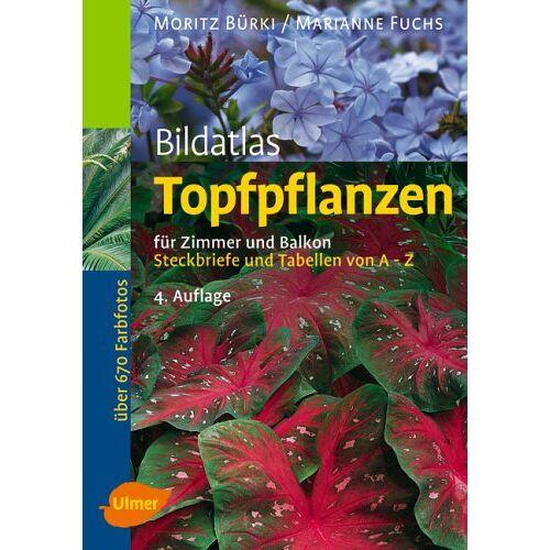 Moritz Bürki - Bildatlas Topfpflanzen für Zimmer und Balkon - Preis vom 20.06.2021 04:47:58 h