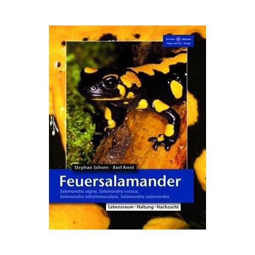 Stephan Schorn - Feuersalamander: Salamandra algira, Salamandra corsica, Salamandra infraimmaculata, Salamandra salamandra - Preis vom 17.05.2021 04:44:08 h