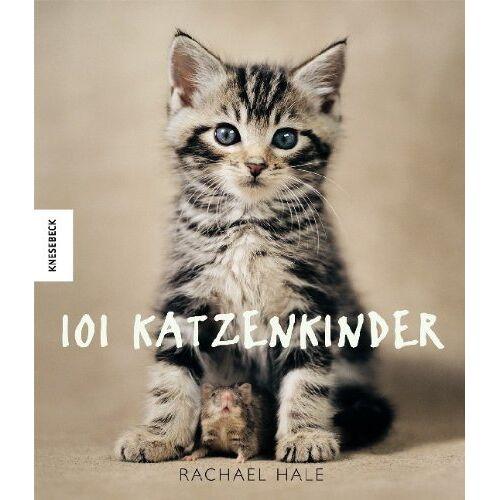 Rachael Hale - 101 Katzenkinder - Preis vom 13.06.2021 04:45:58 h
